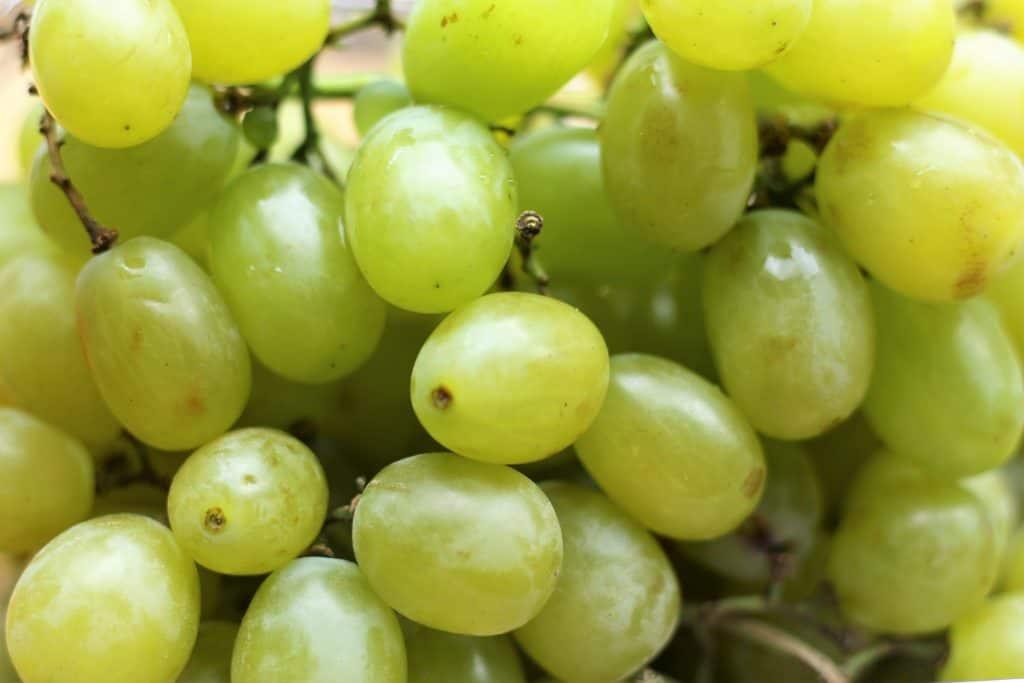 Trader Joe's Cotton Candy Grapes
